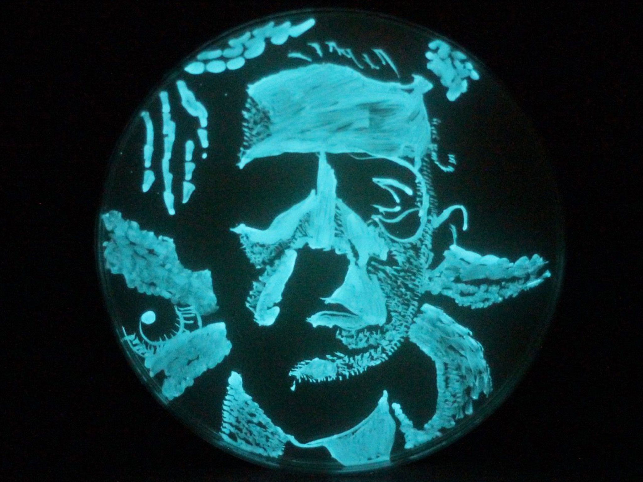 HPL portrait in bacteria